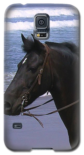 Morgan Head Horse On Beach Galaxy S5 Case