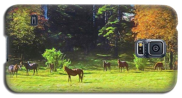 Morgan Horses In Autumn Pasture Galaxy S5 Case
