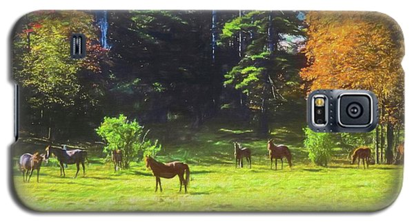 Morgan Horses In Autumn Pasture Galaxy S5 Case