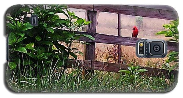 Morning Cardinal Galaxy S5 Case