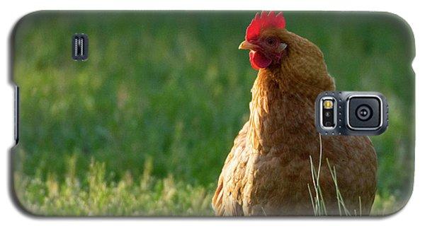 Morning Chicken Galaxy S5 Case