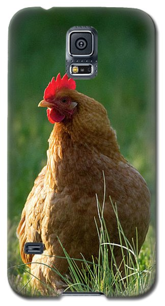 Morning Chicken Galaxy S5 Case