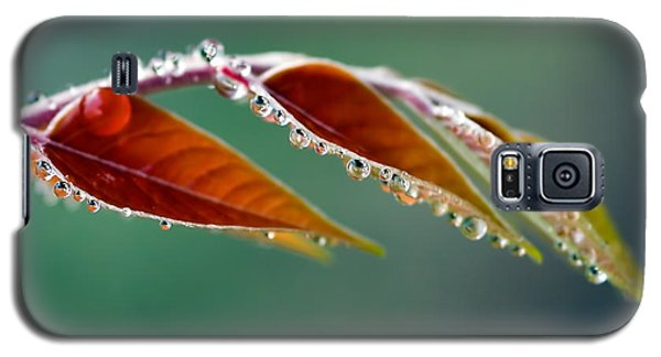 Galaxy S5 Case featuring the photograph Morning Dew by Joerg Lingnau