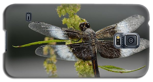 Galaxy S5 Case featuring the photograph Morning Dew by Randy Bodkins