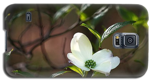Morning Dogwood At Buffalo River Trail Galaxy S5 Case