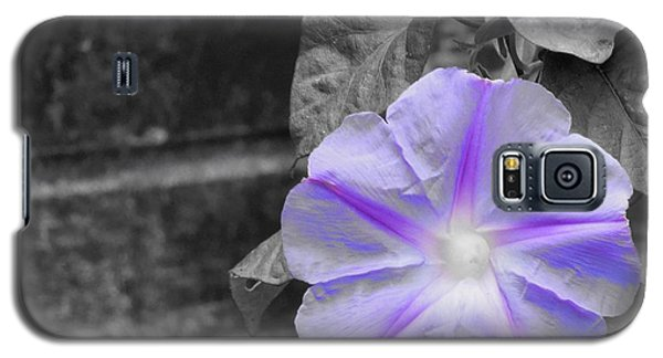 Galaxy S5 Case featuring the photograph Morning Glory Flower by Chad and Stacey Hall