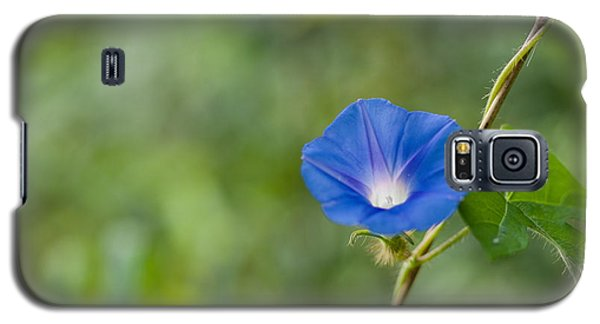 Morning Glory Galaxy S5 Case