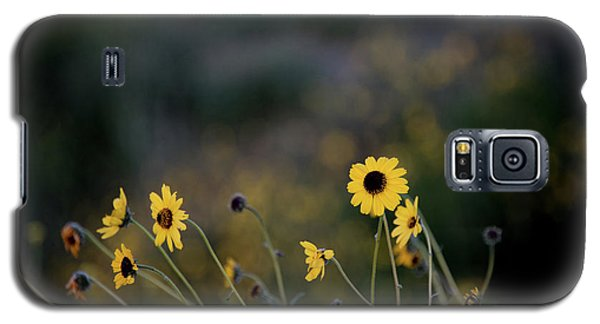 Galaxy S5 Case featuring the photograph Morning Light by Kelly Wade