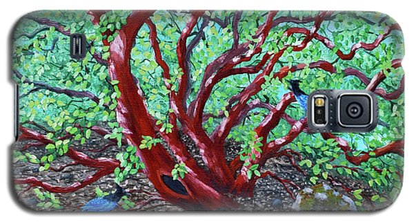 Bluejay Galaxy S5 Case - Morning Manzanita by Laura Iverson
