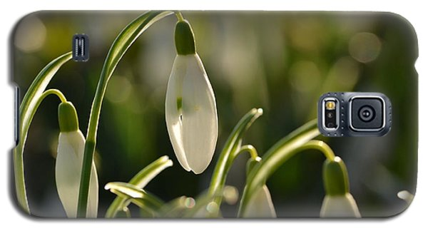 Morning Snowdrops Galaxy S5 Case