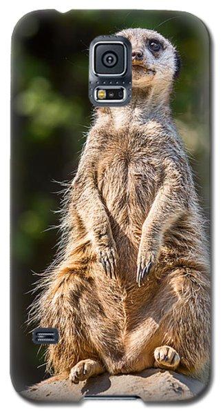 Morning Sun Galaxy S5 Case by Jamie Pham