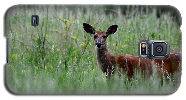 Morninng Deer Galaxy S5 Case