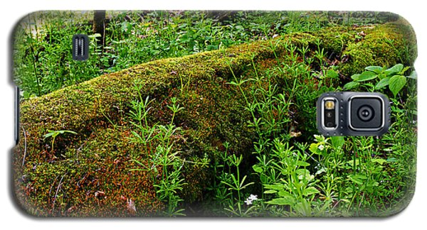Moss Covered Log 2 Galaxy S5 Case
