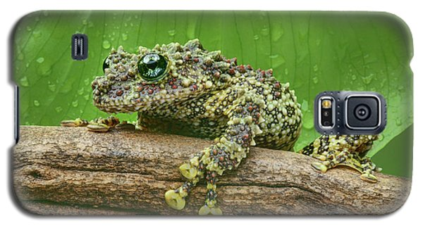 Galaxy S5 Case featuring the photograph Mossy Frog by Nikolyn McDonald