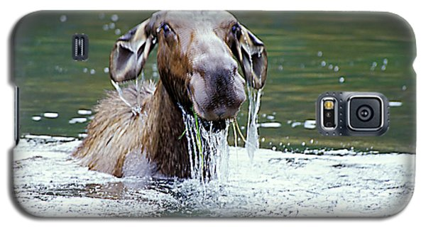 Mossy Moose Galaxy S5 Case
