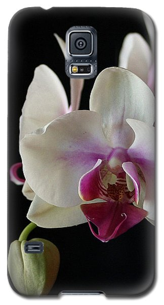 Galaxy S5 Case featuring the photograph Moth Orchid 2 by Marna Edwards Flavell