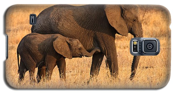Mother And Baby Elephants Galaxy S5 Case
