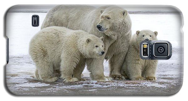 Mother And Cubs In The Arctic Galaxy S5 Case