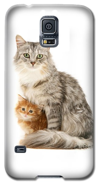 Mother Cat And Ginger Kitten Galaxy S5 Case