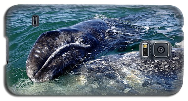 Mother Grey Whale And Baby Calf Galaxy S5 Case