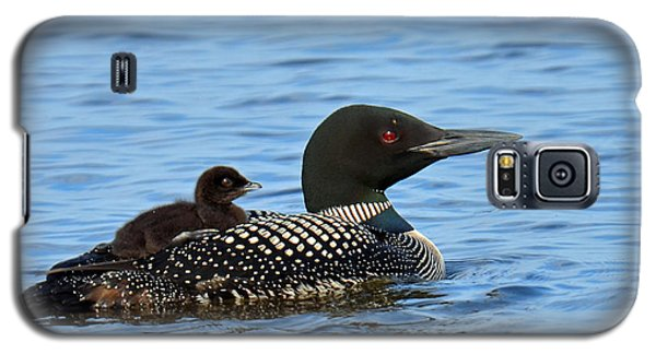 Mother Loon And Her Baby Galaxy S5 Case