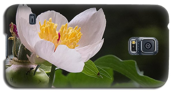 Mothers Day Peony Galaxy S5 Case