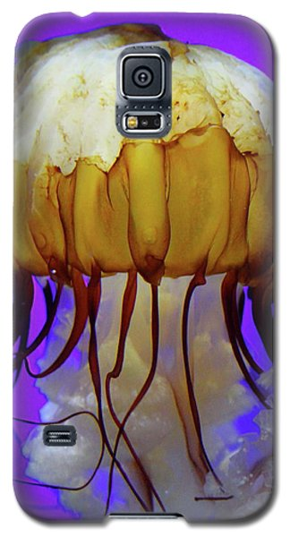 Motion In Reds And Oranges Galaxy S5 Case by Laddie Halupa