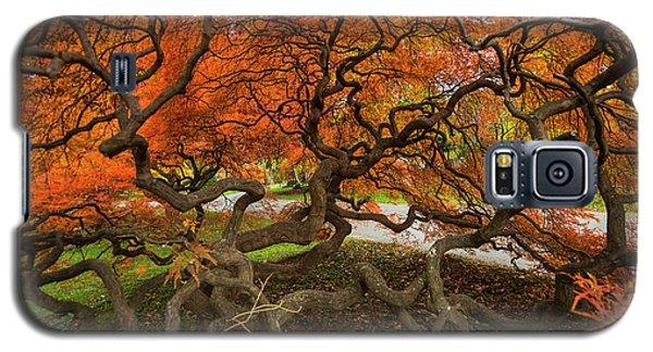 Mount Auburn Cemetery Beautiful Japanese Maple Tree Orange Autumn Colors Branches Galaxy S5 Case