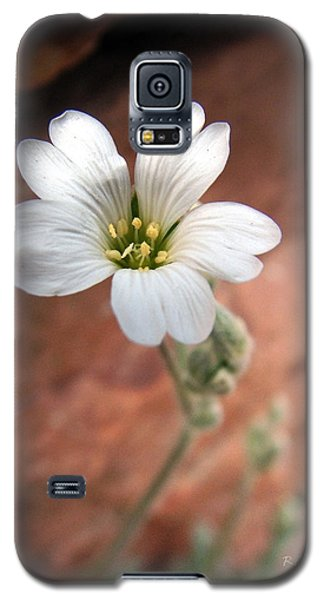 Mountain Beauty Galaxy S5 Case by RC DeWinter