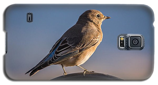 Mountain Bluebird At Sunset Galaxy S5 Case