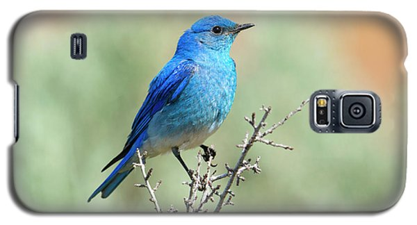 Mountain Bluebird Beauty Galaxy S5 Case by Mike Dawson