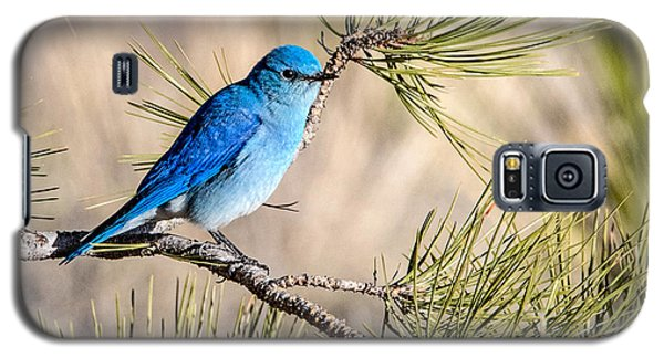 Mountain Bluebird In A Pine Galaxy S5 Case