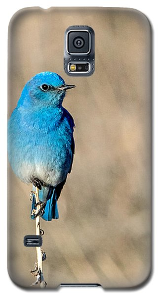 Mountain Bluebird On A Stem. Galaxy S5 Case