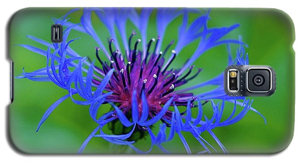 Mountain Cornflower Galaxy S5 Case by Byron Varvarigos