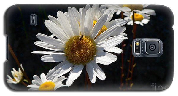 Galaxy S5 Case featuring the photograph Mountain Daisy by Larry Keahey