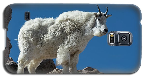 Galaxy S5 Case featuring the photograph Mountain Goat 2 by Gary Lengyel
