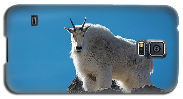 Galaxy S5 Case featuring the photograph Mountain Goat 3 by Gary Lengyel