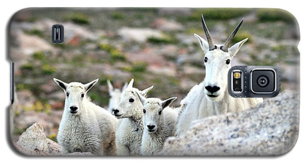 Galaxy S5 Case featuring the photograph Mountain Goat Family Panorama by Scott Mahon