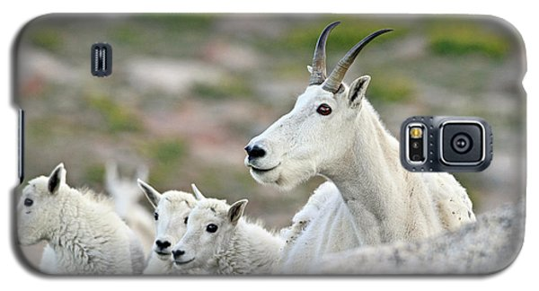 Galaxy S5 Case featuring the photograph Mountain Goat Family by Scott Mahon