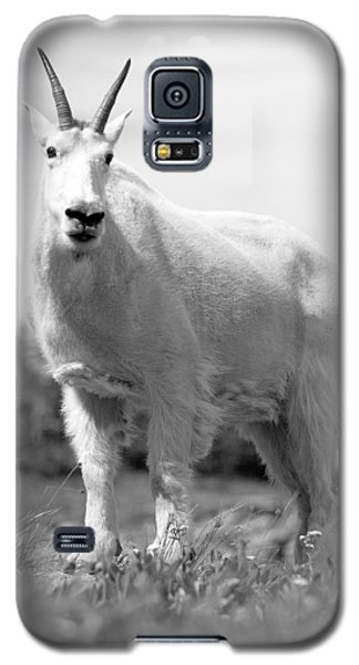 Mountain Goat Galaxy S5 Case by Sebastian Musial