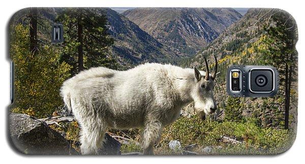 Mountain Goat Sentry Galaxy S5 Case