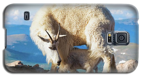 Mountain Goats Nanny And Kid Galaxy S5 Case