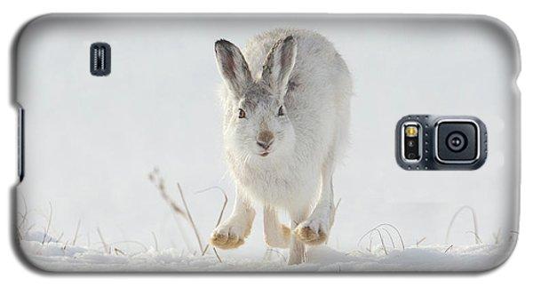 Mountain Hare Approaching Galaxy S5 Case