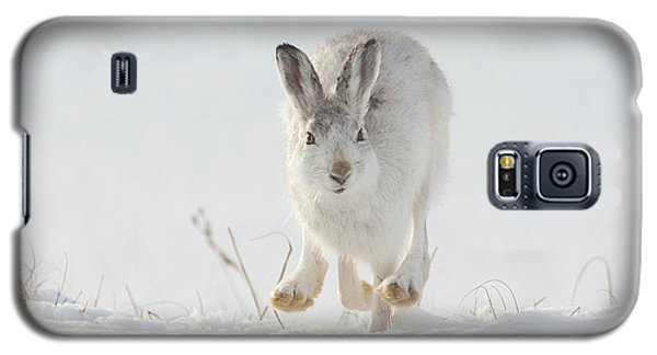 Mountain Hare Approaching Galaxy S5 Case