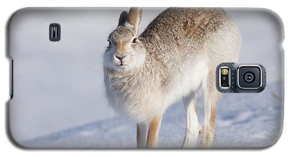 Mountain Hare In The Snow - Lepus Timidus  #2 Galaxy S5 Case