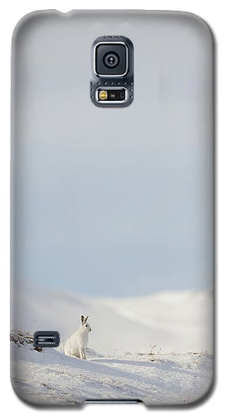 Mountain Hare On Hillside Galaxy S5 Case
