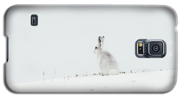 Mountain Hare Sat In Snow Galaxy S5 Case