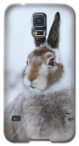Mountain Hare - Scotland Galaxy S5 Case