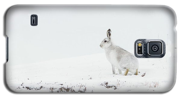 Mountain Hare Side On Galaxy S5 Case