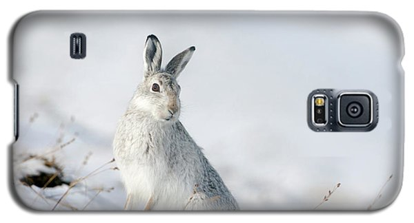Mountain Hare Sitting In Snow Galaxy S5 Case
